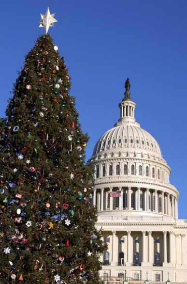 washington christmas tree