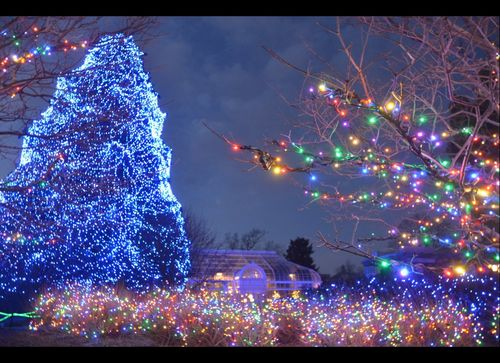 christmas tree Toledo Zoo ohio
